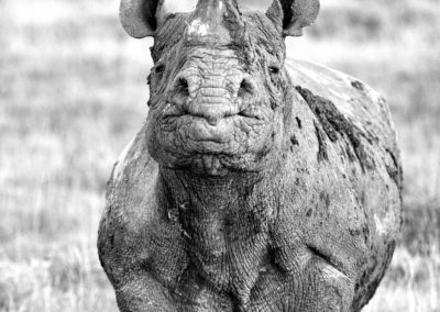Pro Photo Safaris - Iky's Photographic, Shamwari Game Reserve